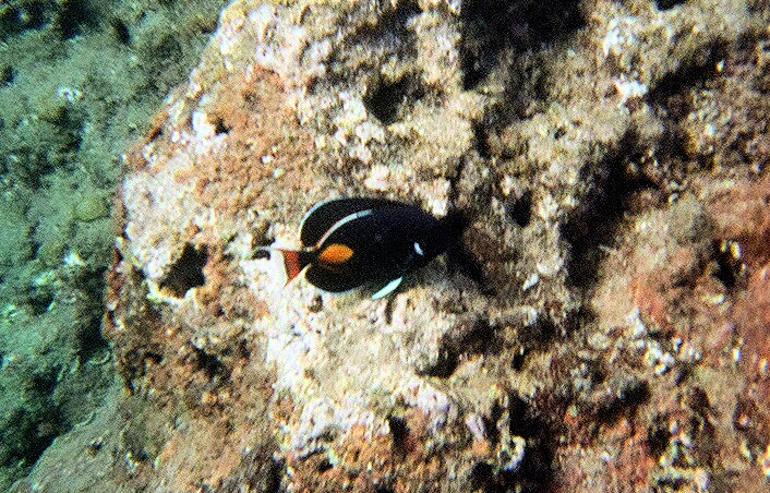 Snorkeling at Nualolo Napali Coast Boat Tour | Footsteps of a Dreamer
