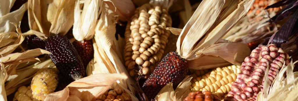 Thanksgiving Around the World - Ornamental Corn