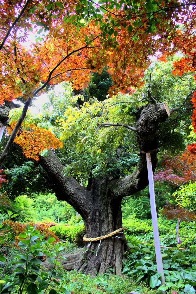 Chinzanso Garden, Tokyo, Japan | Footsteps of a Dreamer