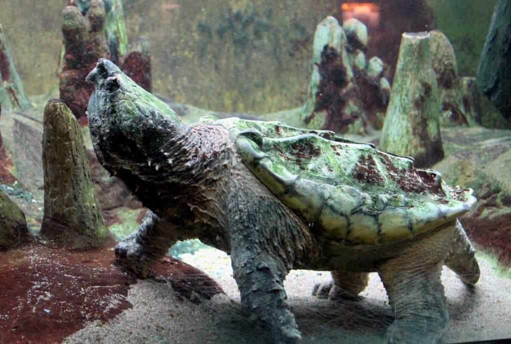 Chicago Shedd Aquarium | Footsteps of a Dreamer