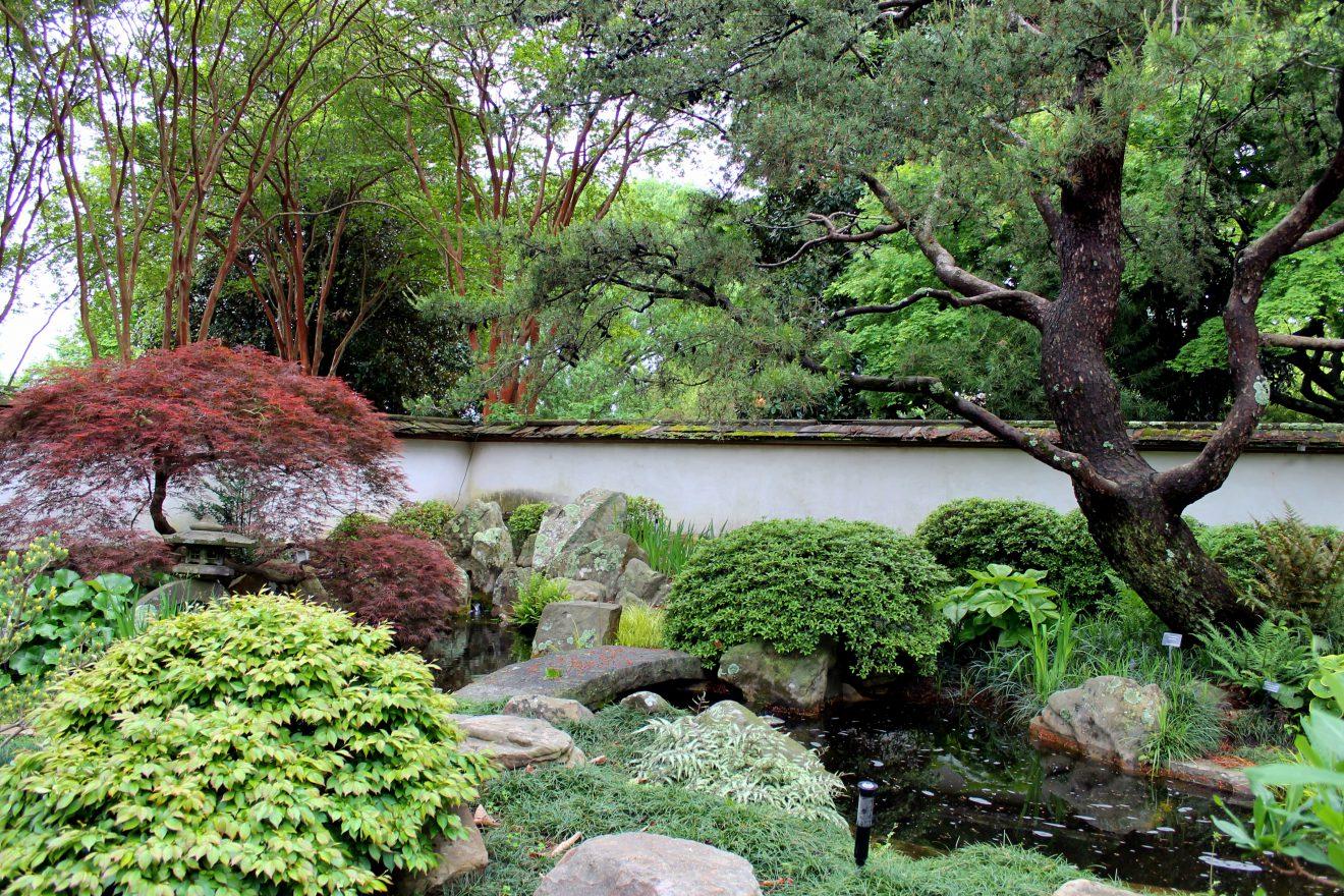 Atlanta Botanical Garden Japanese Garden