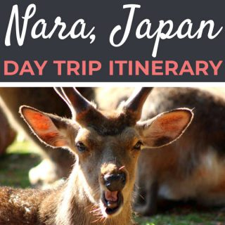 Day Trip to Nara Itinerary | Footsteps of a Dreamer