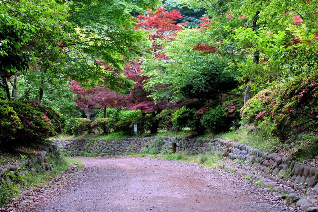 Kamakura | Footsteps of a Dreamer