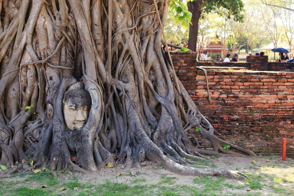 Ayutthaya, Thailand, Yoga Wine Travel