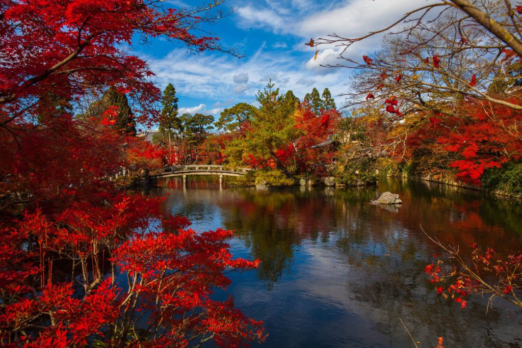 Fall in Japan | Footsteps of a Dreamer