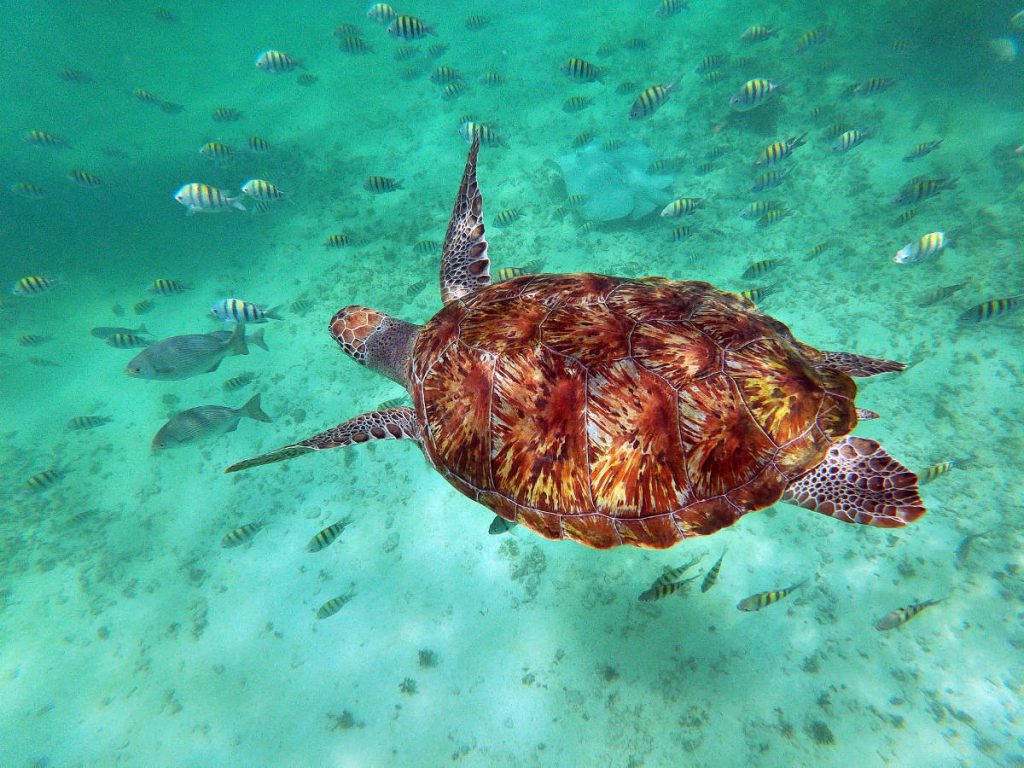 Sea Tutle and Sea of Fish while Snorkeling at Playa Maya | Footsteps of a Dreamer